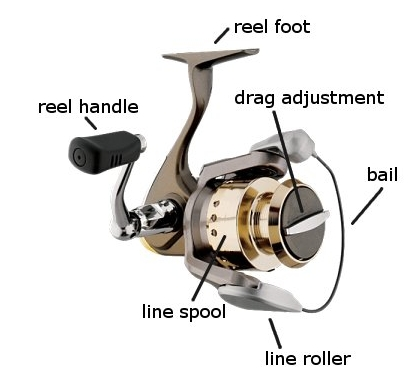 Effective Types Of Fishing Reels